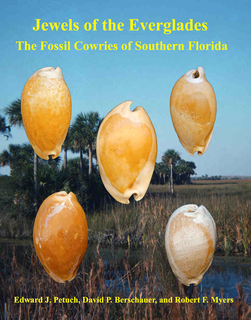 The Jewels of the Everglades-Fossil Cowries of Southern Florida